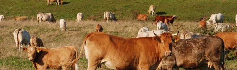 impact-élevage-environnement